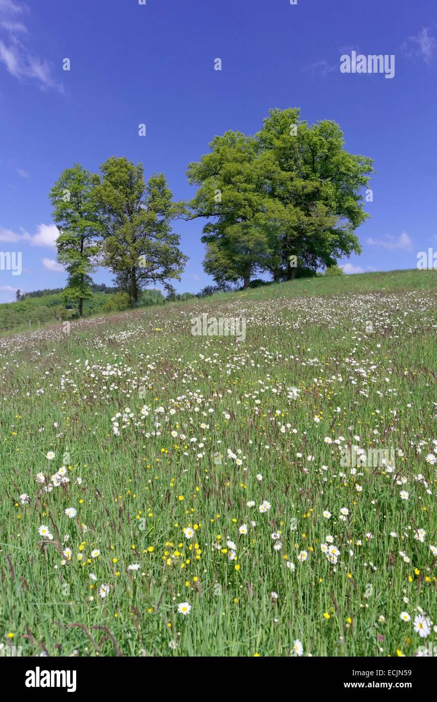 Francia, Creuse, Bourganeuf, prado florido Imagen De Stock