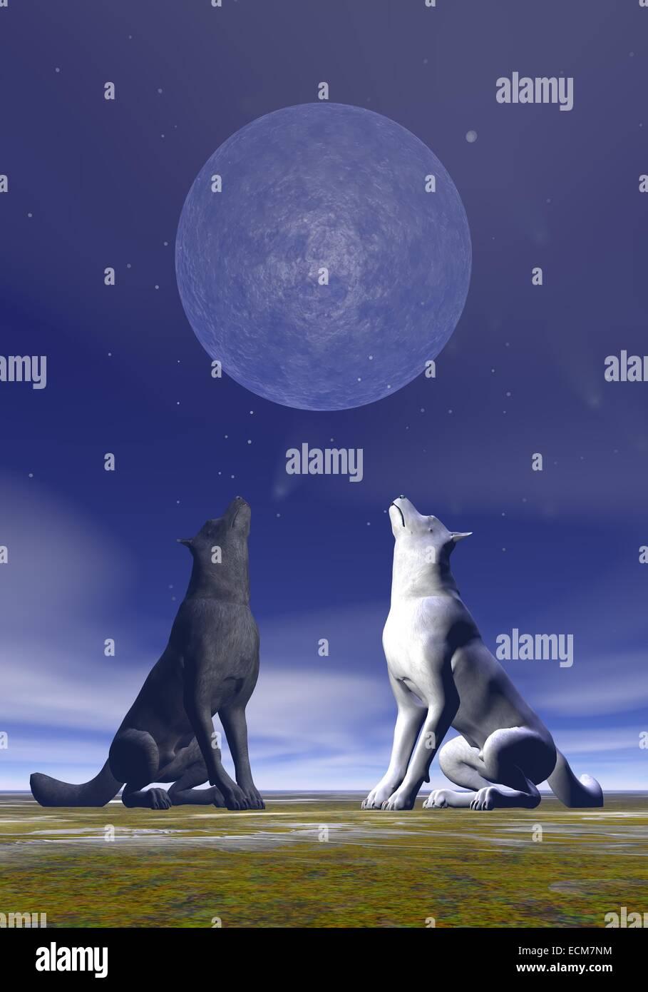 Uno Blanco Y Otro Negro Lobo Aullando A La Luna Llena Por La Noche