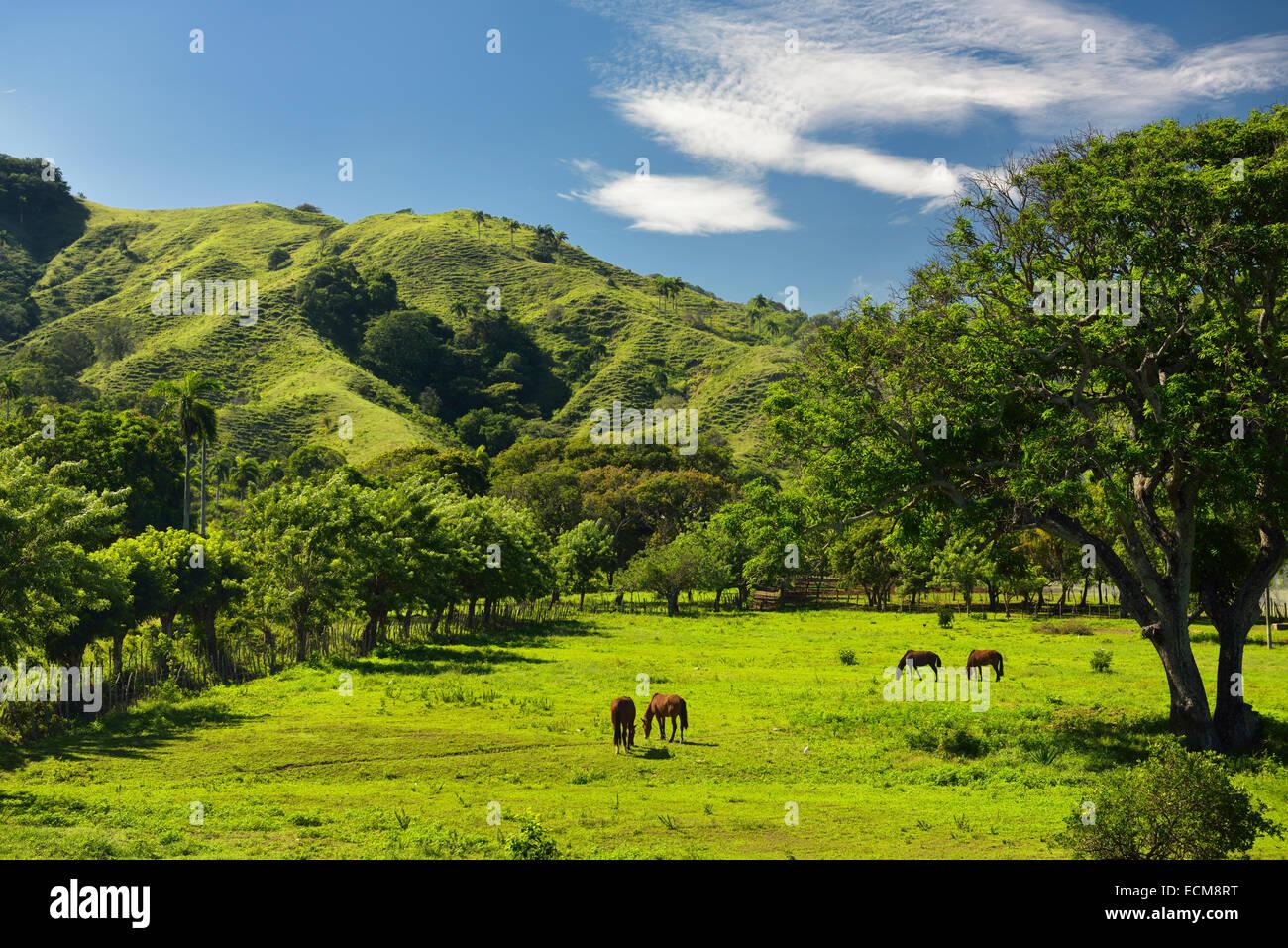 Caballos que pastan en el pasto verde de rancho tierra junto a una montaña del oeste de Puerto Plata, República Imagen De Stock