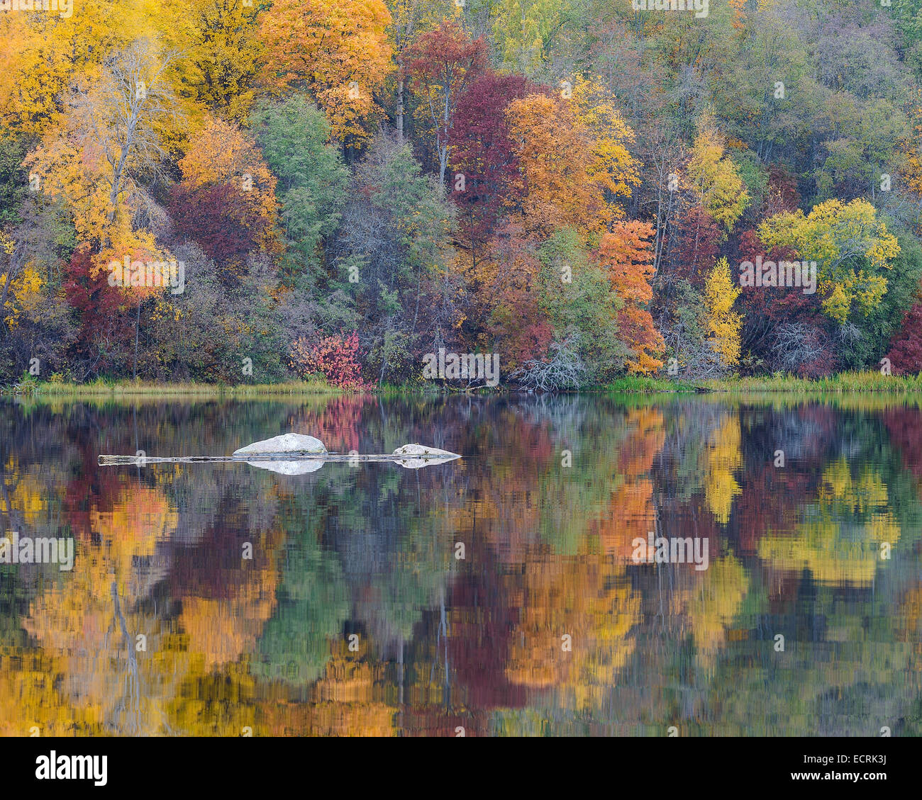 Rocas y un bosque de otoño reflejado en un río. Imagen De Stock