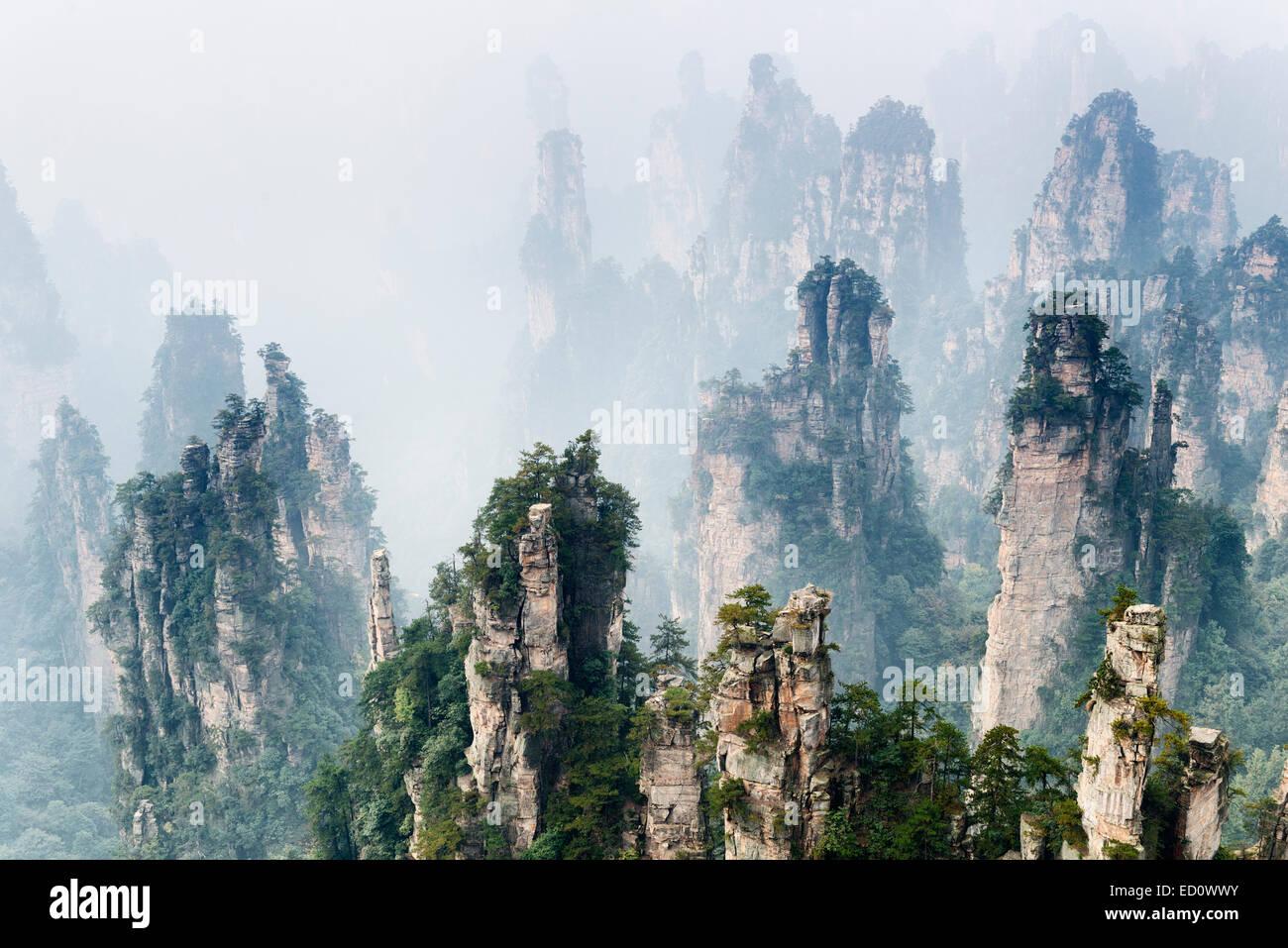 Mountain torres levantándose de la niebla en el Parque Forestal Nacional de Zhangjiajie Zhangjiajie, Hunan, Imagen De Stock