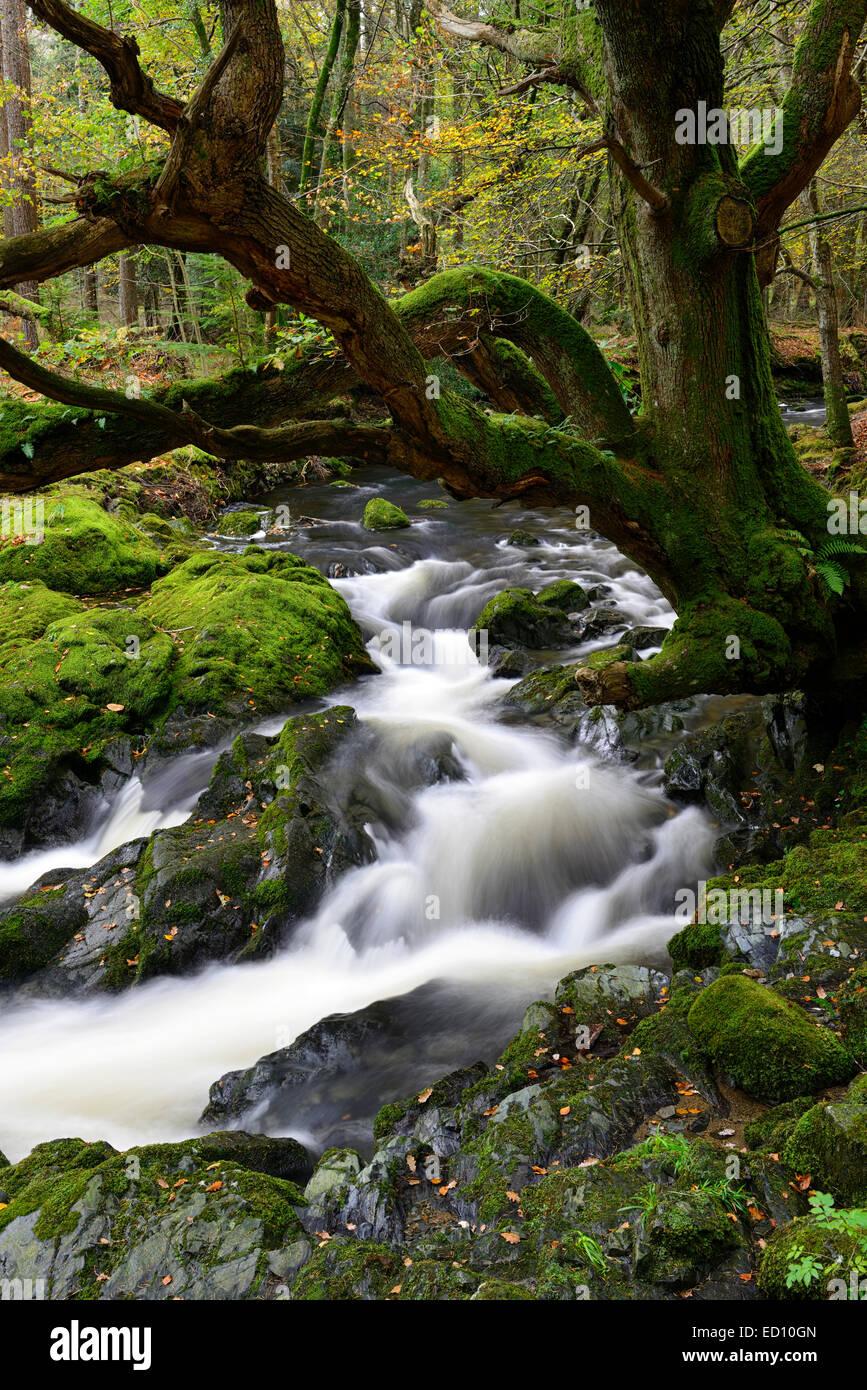 Parque Forestal Tollymore shimna el flujo del río que fluye a través del Condado de Down en Irlanda del Norte el otoño otoñal otoño Foto de stock