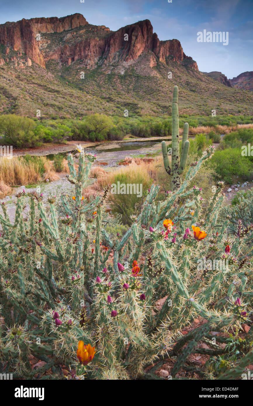 Salt River, el Bosque Nacional de Tonto, al este de Phoenix, Arizona. Foto de stock
