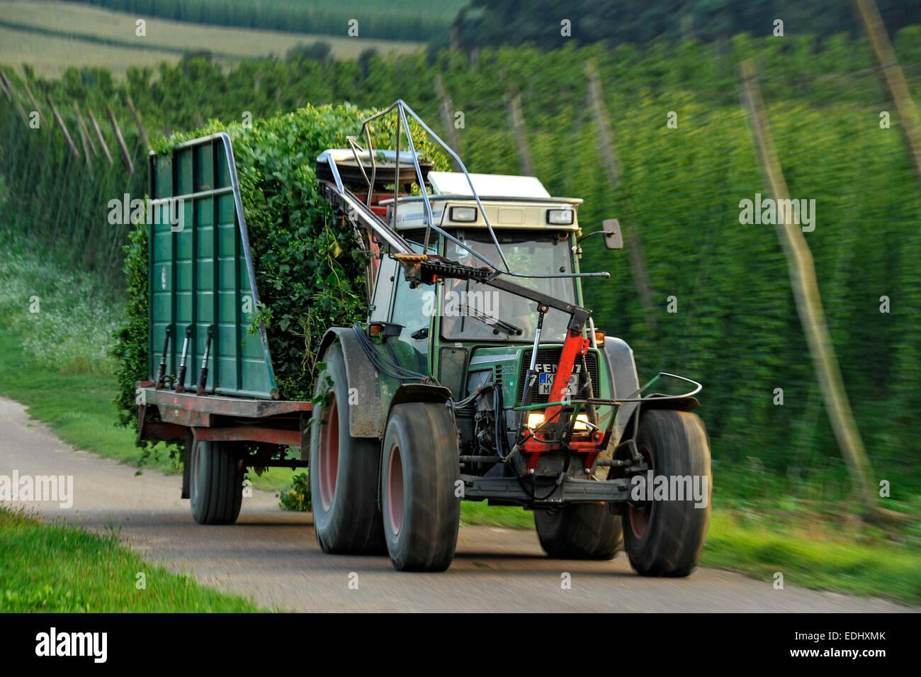 Transporting im genes de stock transporting fotos de for El jardin del lupulo