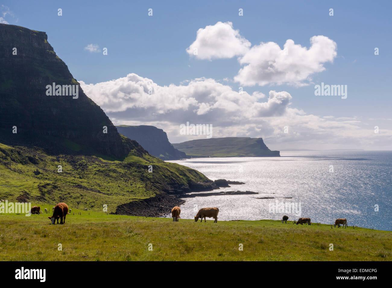 El pastoreo de ganado en neist skye pouint Foto de stock