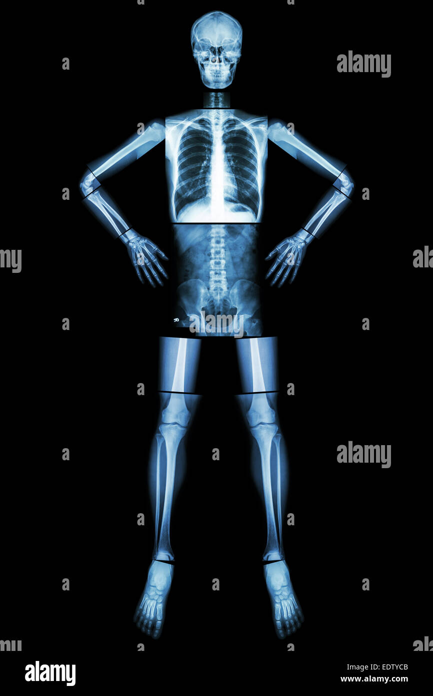 Normal Anatomy Of The Human Body Imágenes De Stock & Normal Anatomy ...