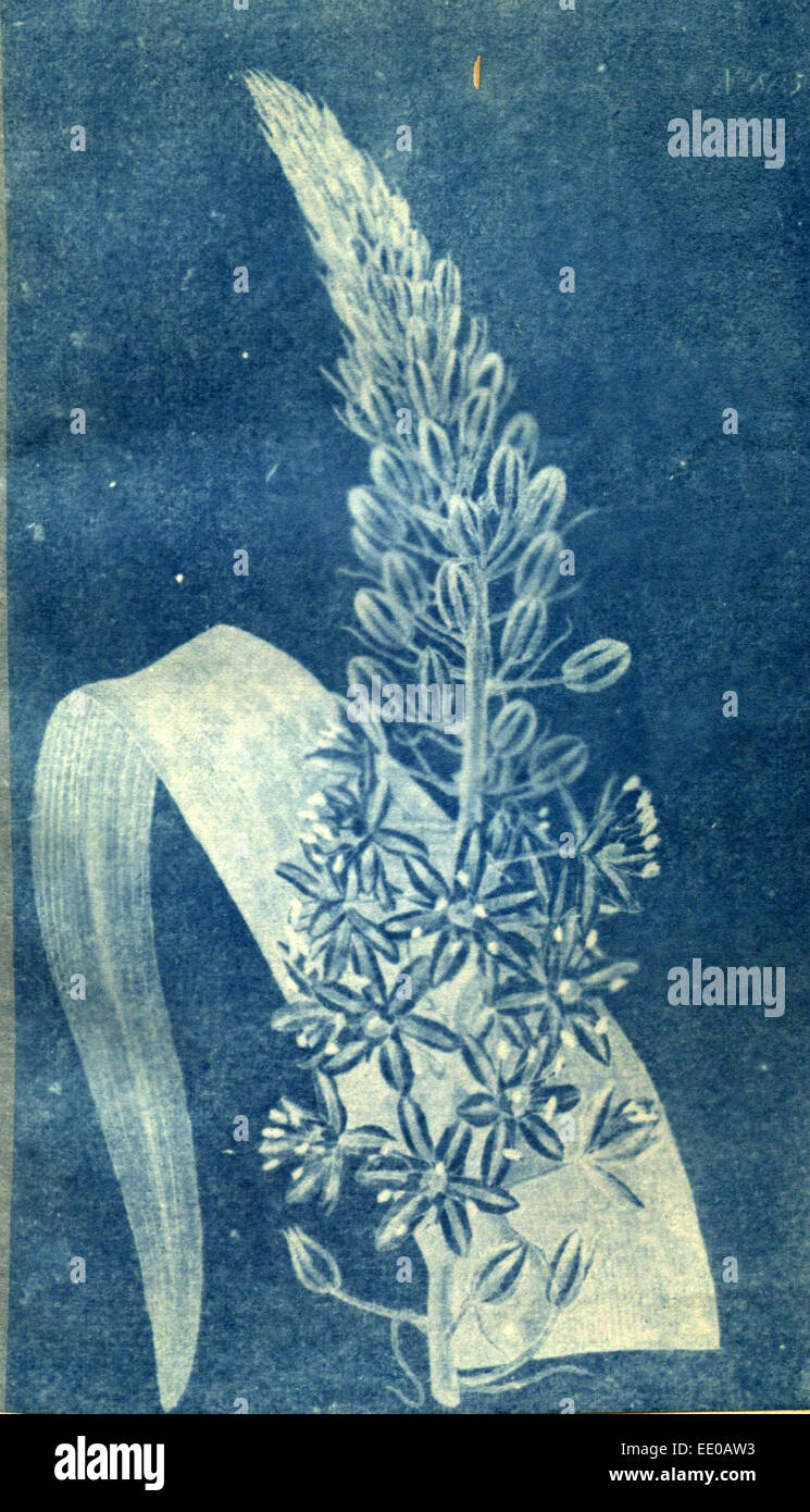 Impresión en color botánico del siglo xix. Ilustración botánica. La forma, el color y los detalles Imagen De Stock