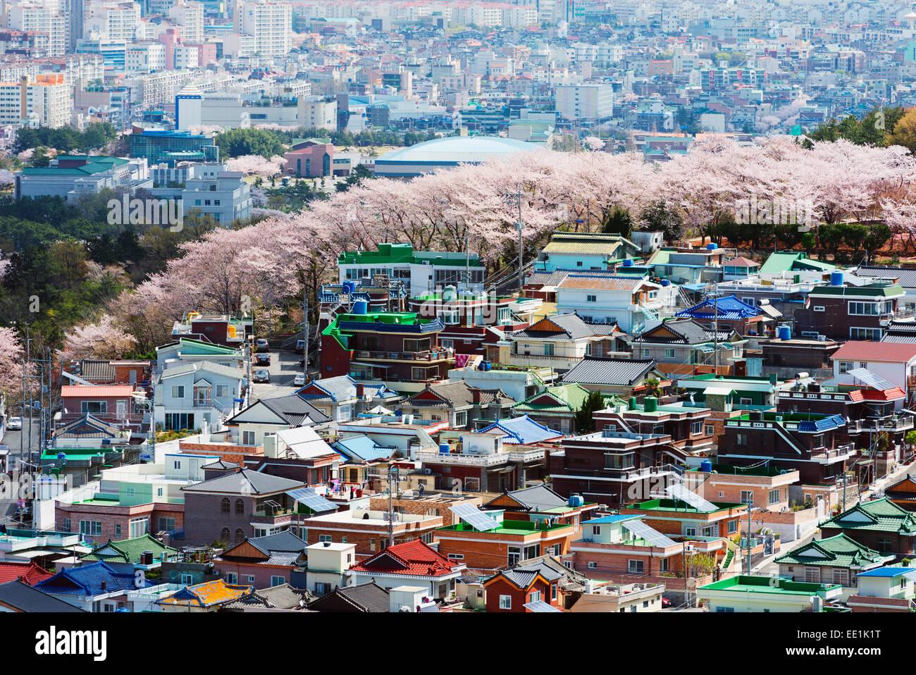Spring Festival de la flor de la cereza, Jinhei, Corea del Sur, Asia Imagen De Stock