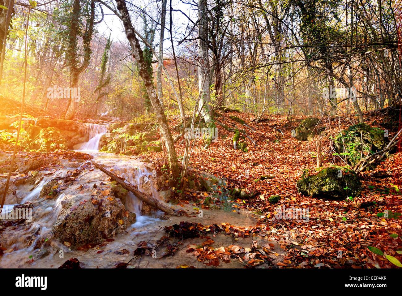 Creek en otoño bosque de montaña al amanecer. Foto de stock
