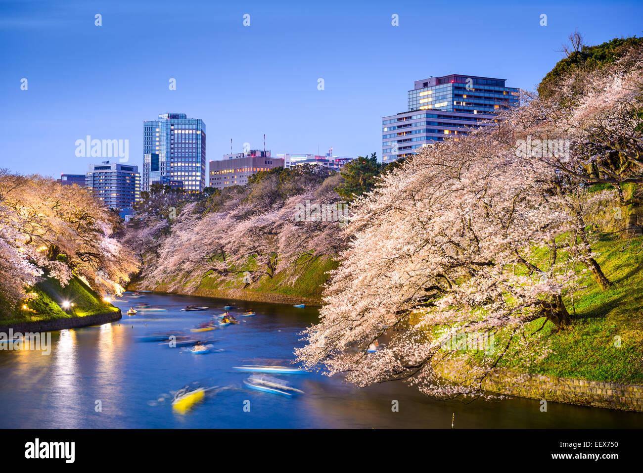 Tokio, Japón a Chidorigafuchi foso del Palacio Imperial durante la temporada de primavera. Imagen De Stock