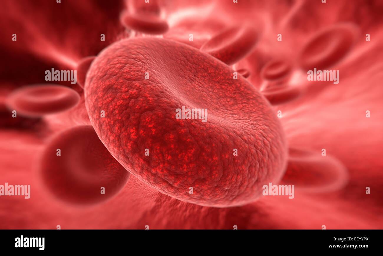 En el enfoque de la célula de sangre Imagen De Stock