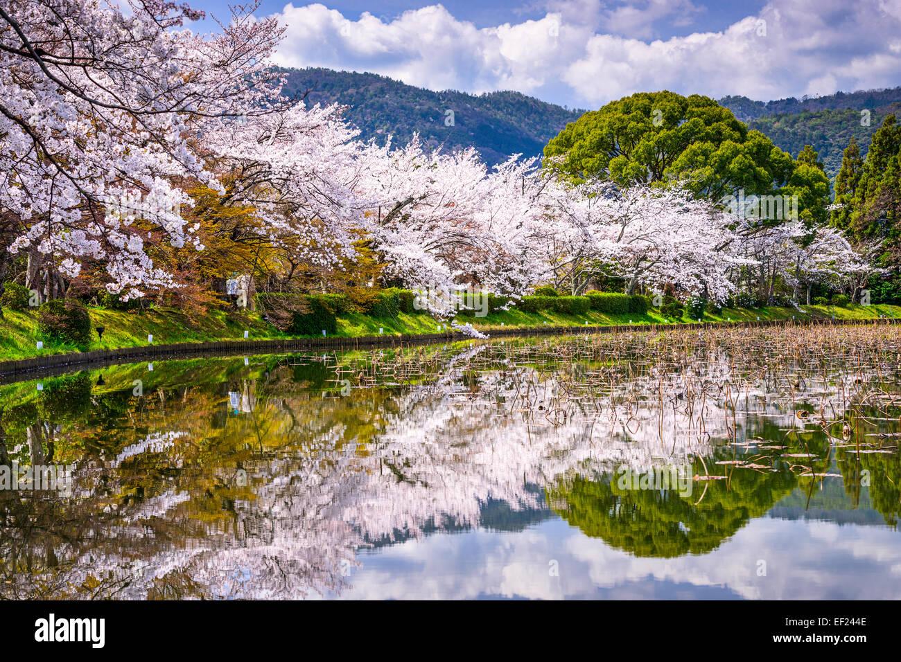 El follaje de primavera en Kyoto, Japón, en el distrito Arashiyama. Foto de stock