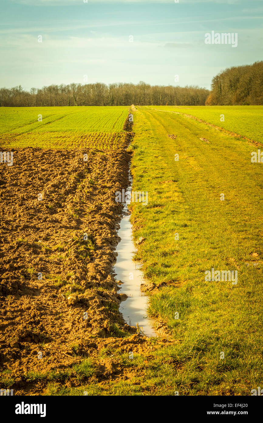 Campo agrícola con cultivos y un gran charco. Imagen De Stock