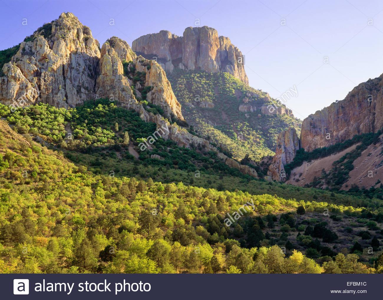 Quebrada verde superior, cerca de la Pantera Pass, Montañas Chisos. El Parque Nacional de Big Bend, Texas Imagen De Stock