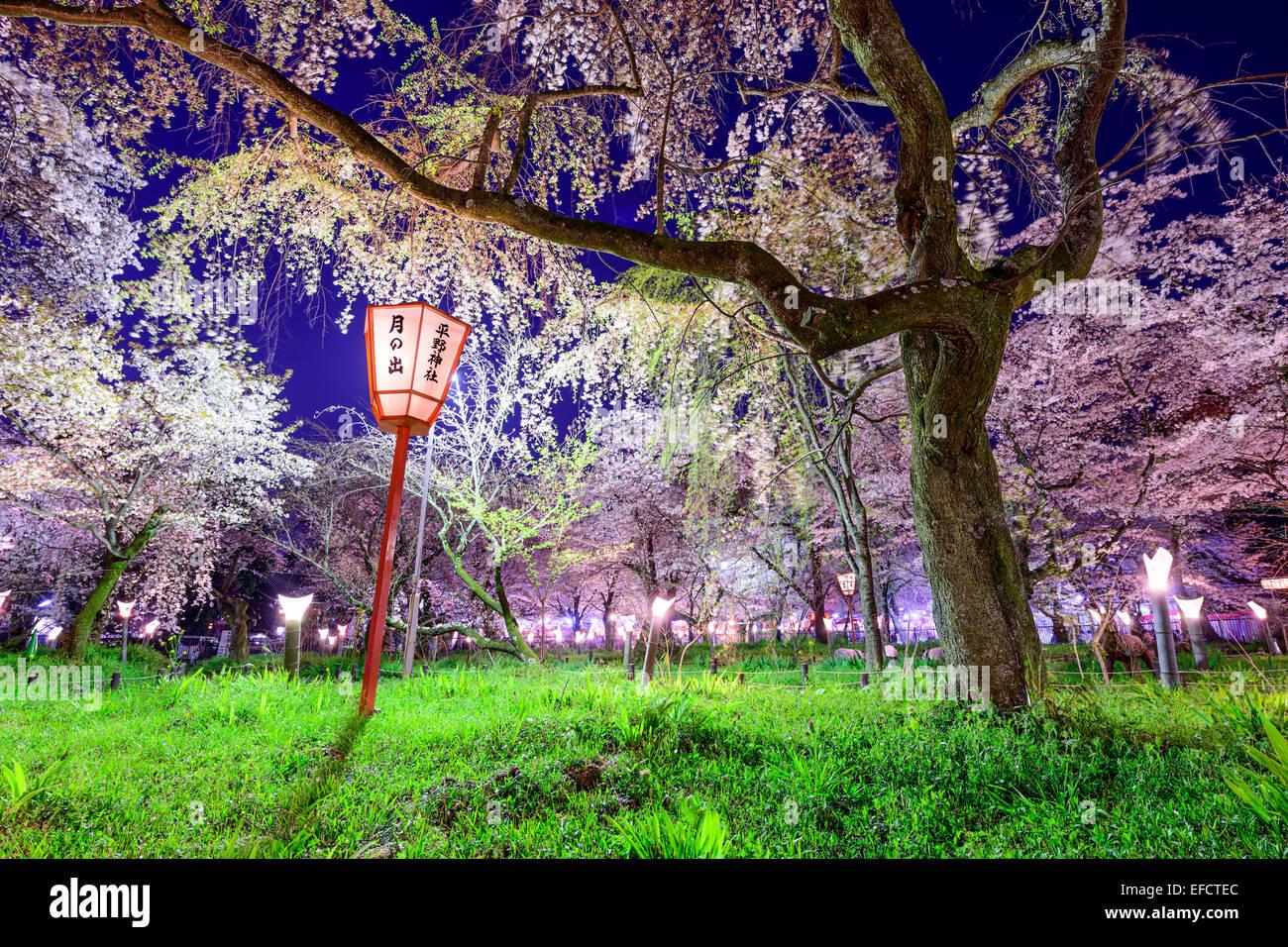 Kyoto, Japón en Hirano templo festival grounds en primavera. La linterna se dice 'Moonrise, Hirano Templo' Imagen De Stock