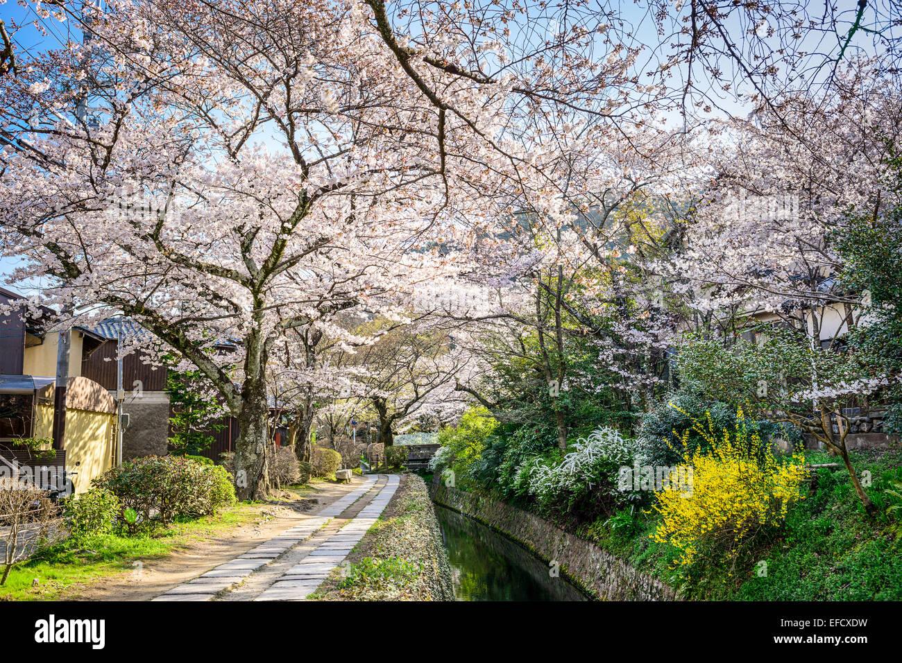 Kyoto, Japón, en Philosopher's Walk en la temporada de primavera. Imagen De Stock