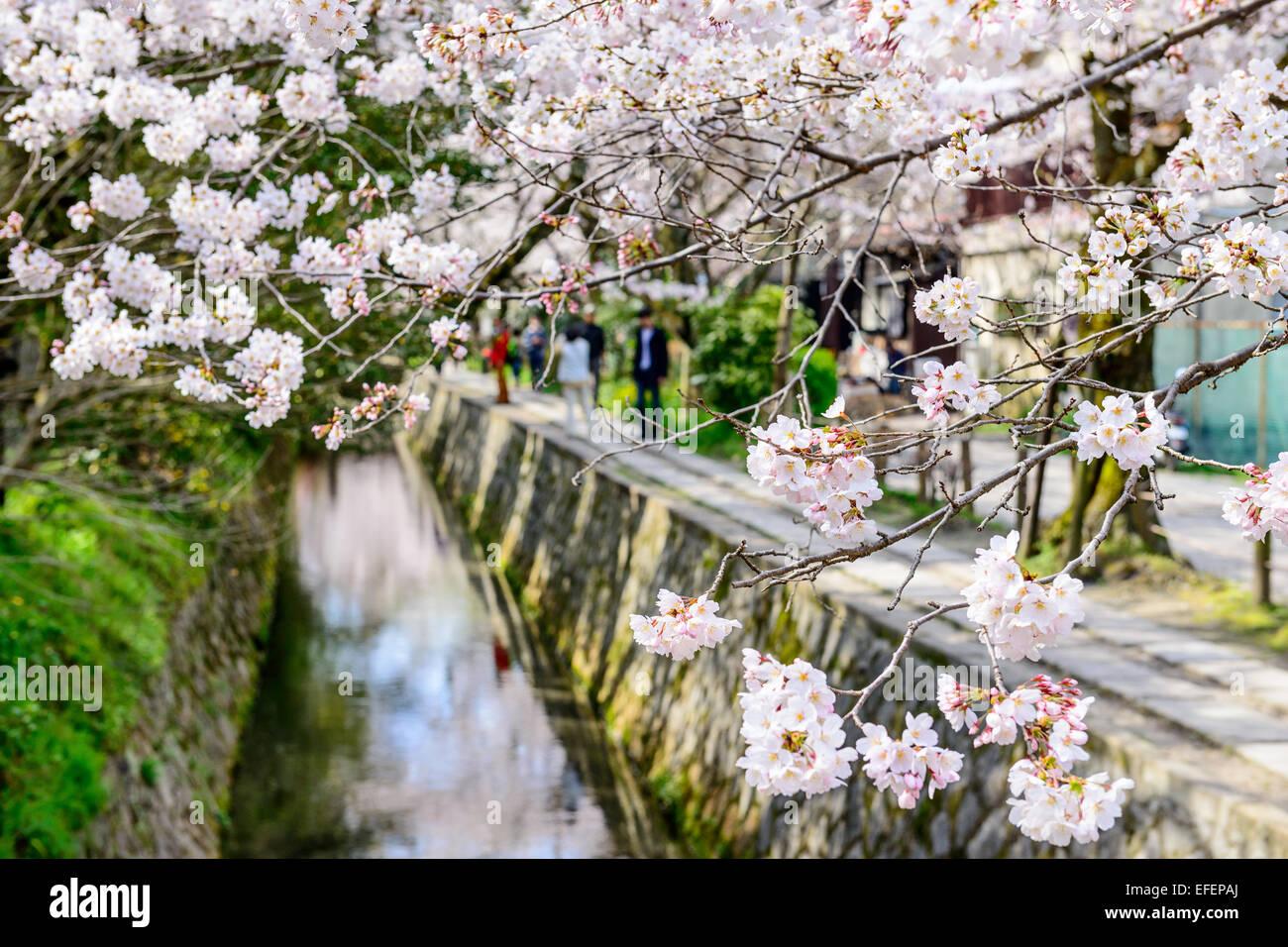 Kyoto, Japón, en Philosopher's Walk en la primavera. Imagen De Stock