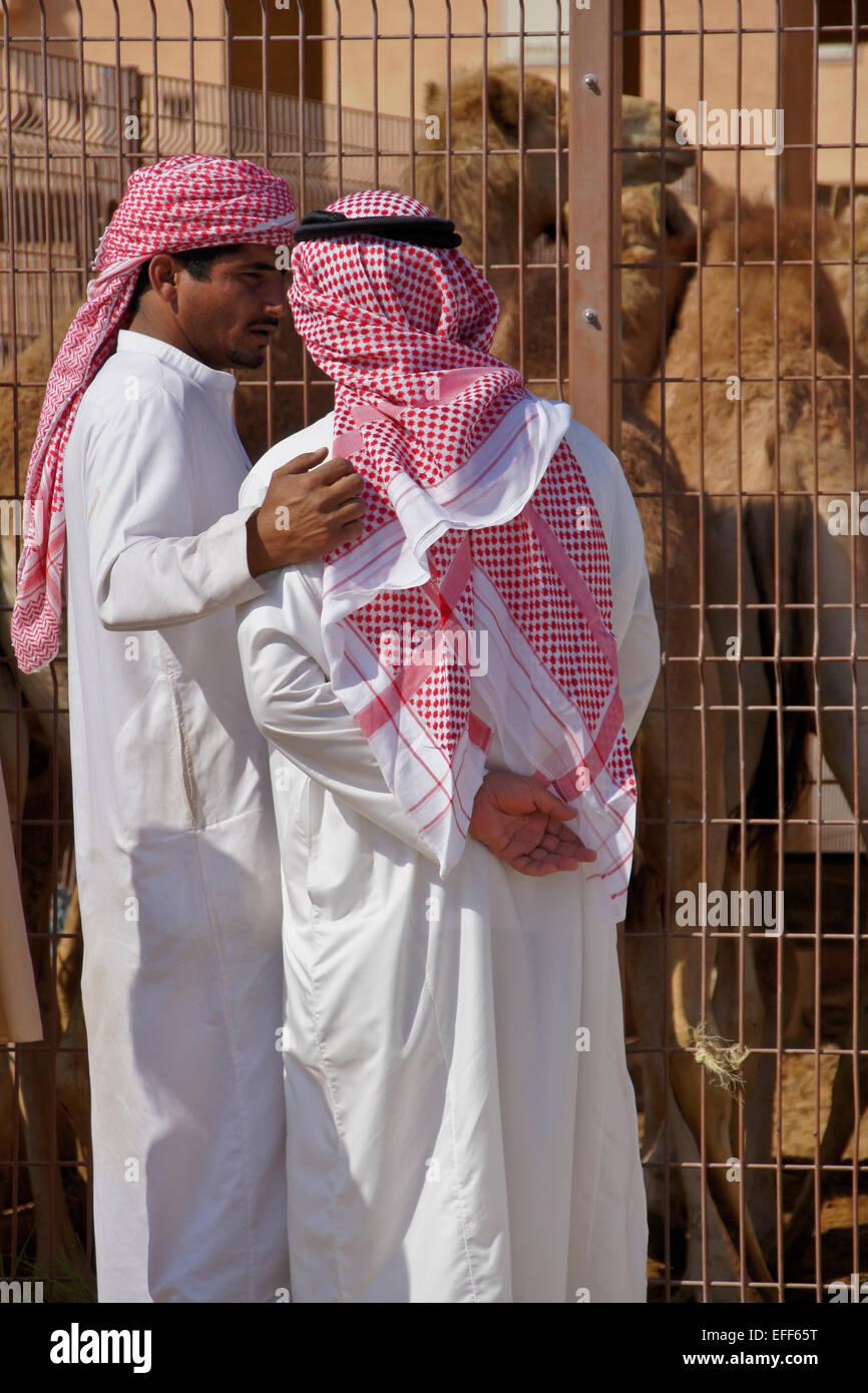 Los hombres comprar camellos para carne en el mercado de camellos, Al Ain, Abu Dhabi, Emiratos Arabes Unidos Imagen De Stock