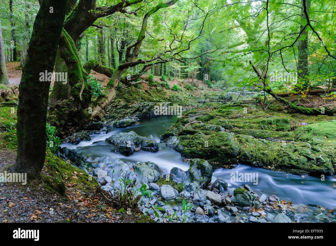 Río Shimna, Newcastle, Irlanda del Norte. Este lugar destacado en una serie de escenas de Juego de Tronos Foto de stock