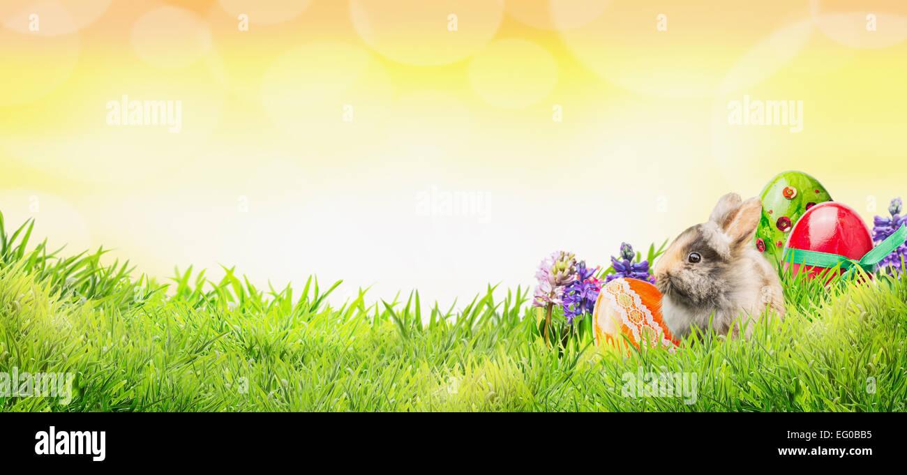 Fondo de Pascua con conejo, huevos y flores sobre la hierba y el cielo soleado con bokeh, banner para la página web Foto de stock