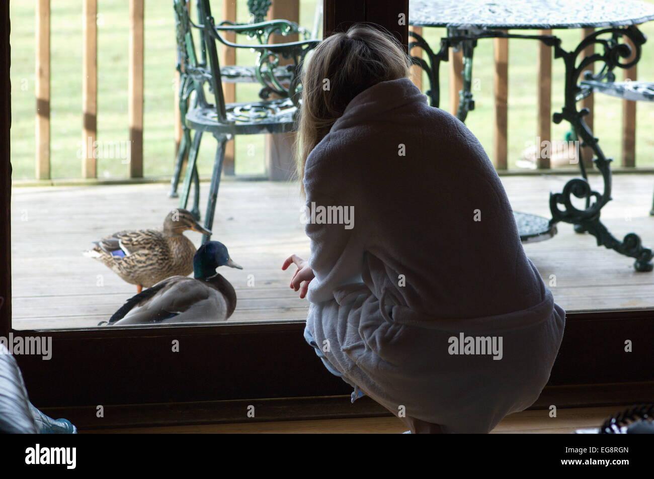 Patos enfoque chica en bata en el cottage en Lake District, Cumbria Imagen De Stock