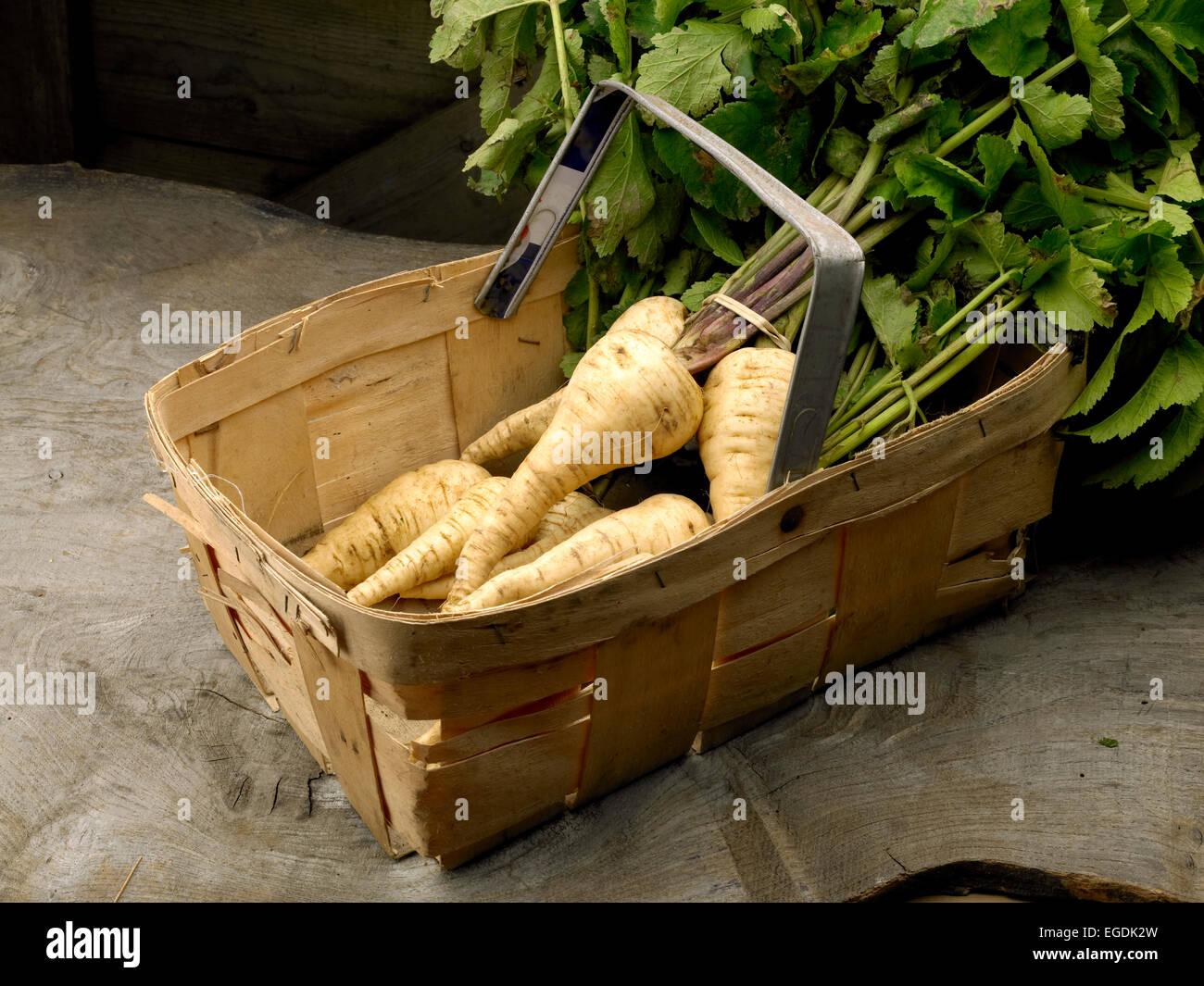 chirivías Imagen De Stock