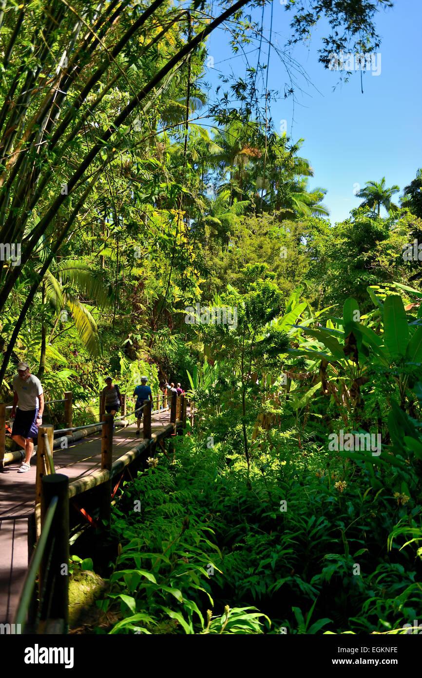 Jardín botánico tropical de Hawaii en Bahía Onomea, Big Island, Hawaii, EE.UU. Foto de stock