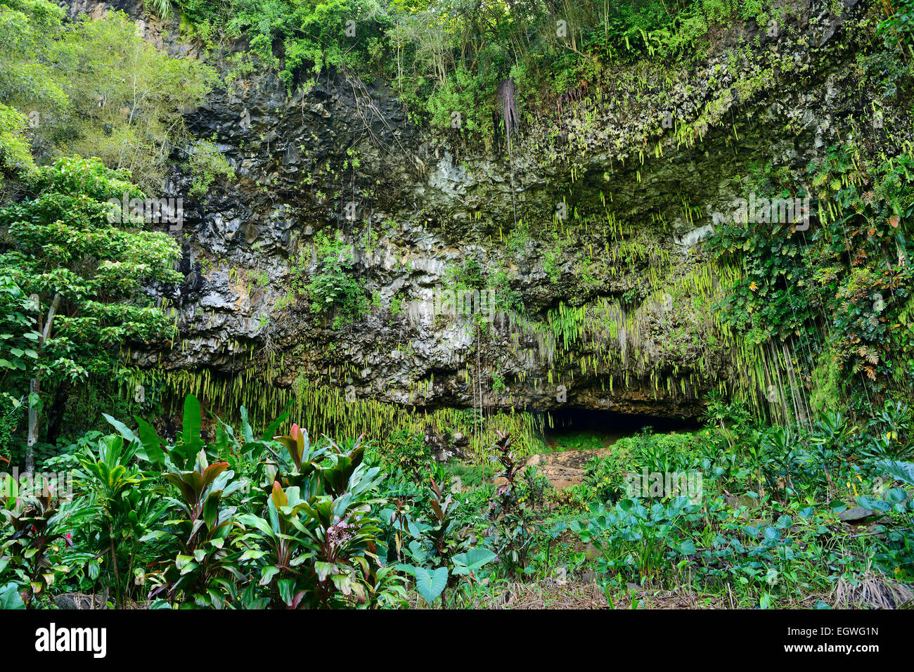 Fern Grotto en Wailua River State Park, Kauai, Hawaii, EE.UU. Foto de stock