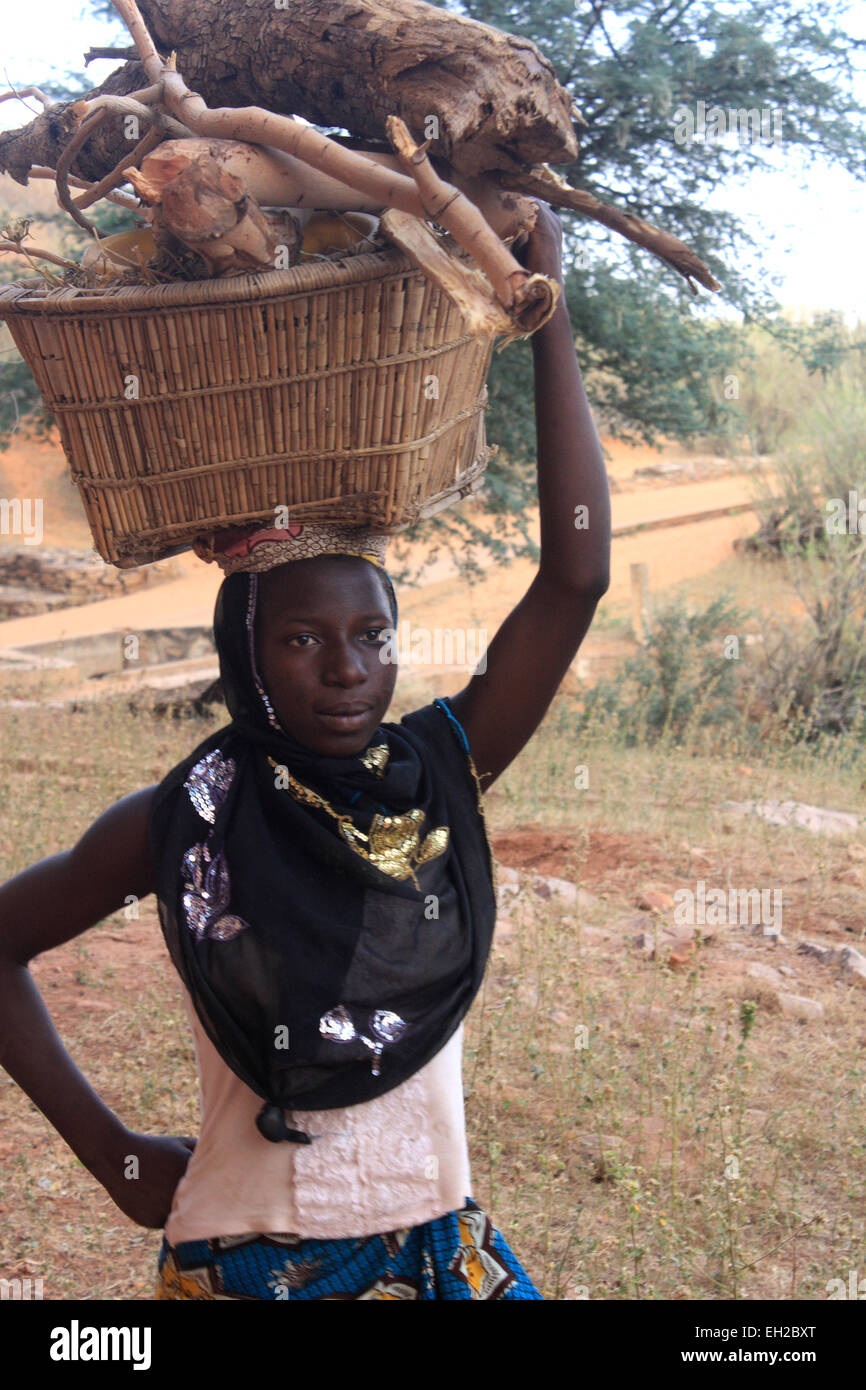Mujer no identificada, que transportaban leña sobre la cabeza de Bandiagara en la región de Mopti en Malí Foto de stock