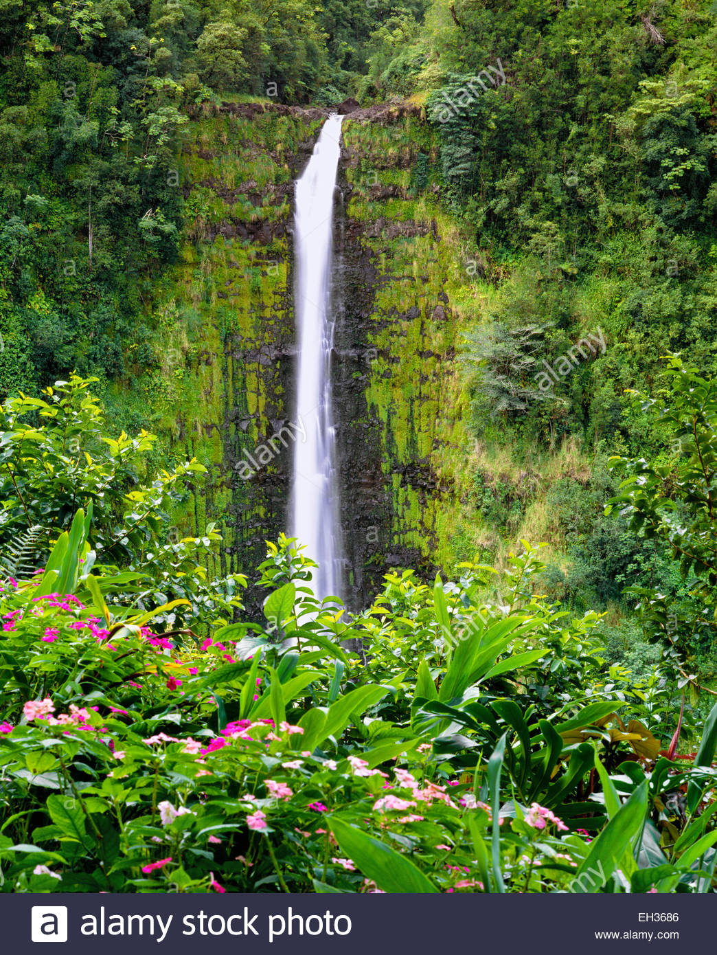 Akaka Falls. La Isla Grande de Hawai. Foto de stock