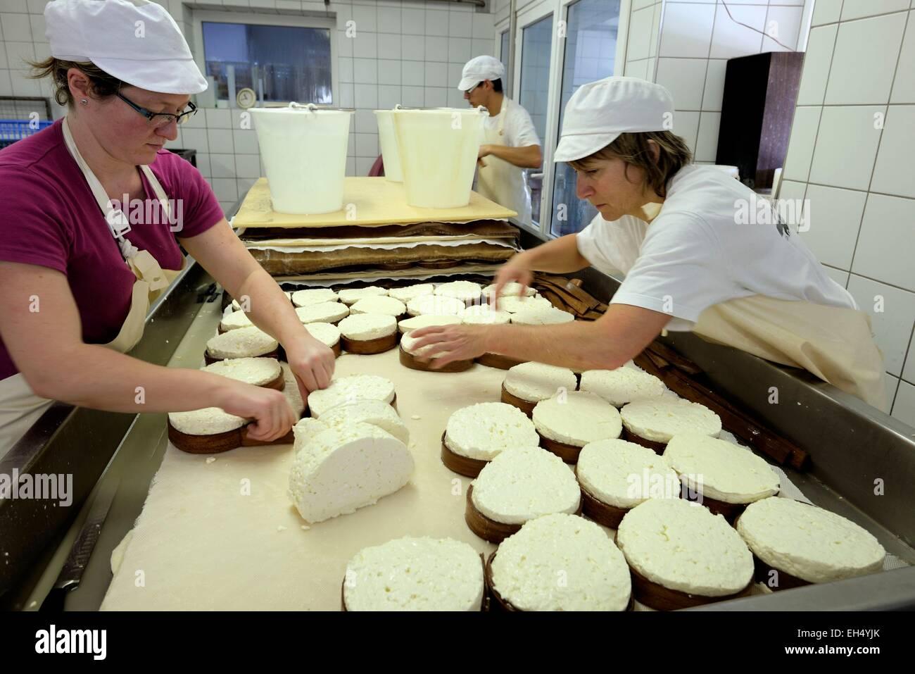 Francia, Doubs, Saint Point Lac, Michelin quesería, queso Mont d o, después de pelar y cortar la cuajada Imagen De Stock