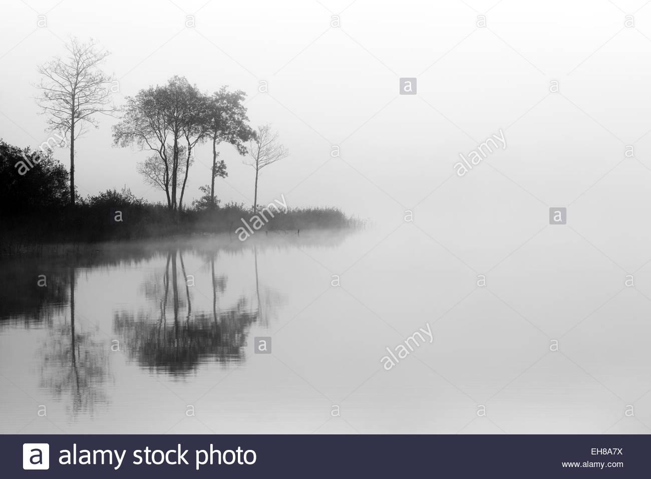 Loch Ard árboles en la niebla reflexionando sobre el agua. Stirlingshire, Escocia Imagen De Stock