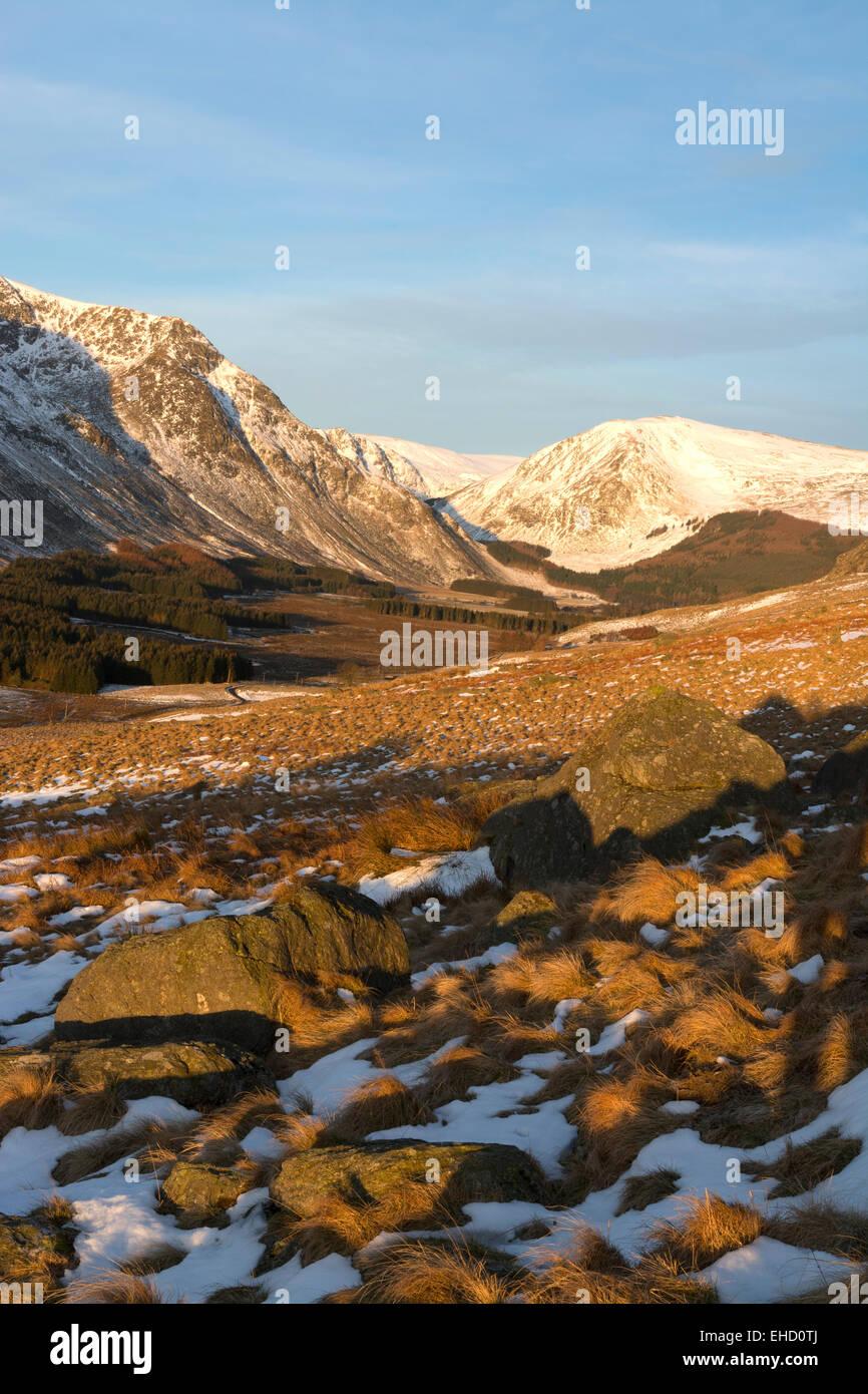 Glen clova angus en snowy frío amanecer claro y nítido resplandor Imagen De Stock