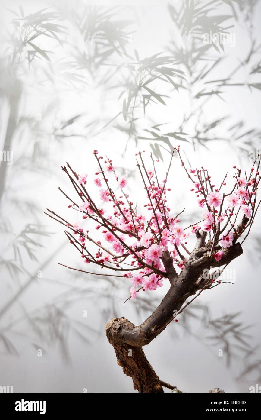 El ciruelo en flor Imagen De Stock