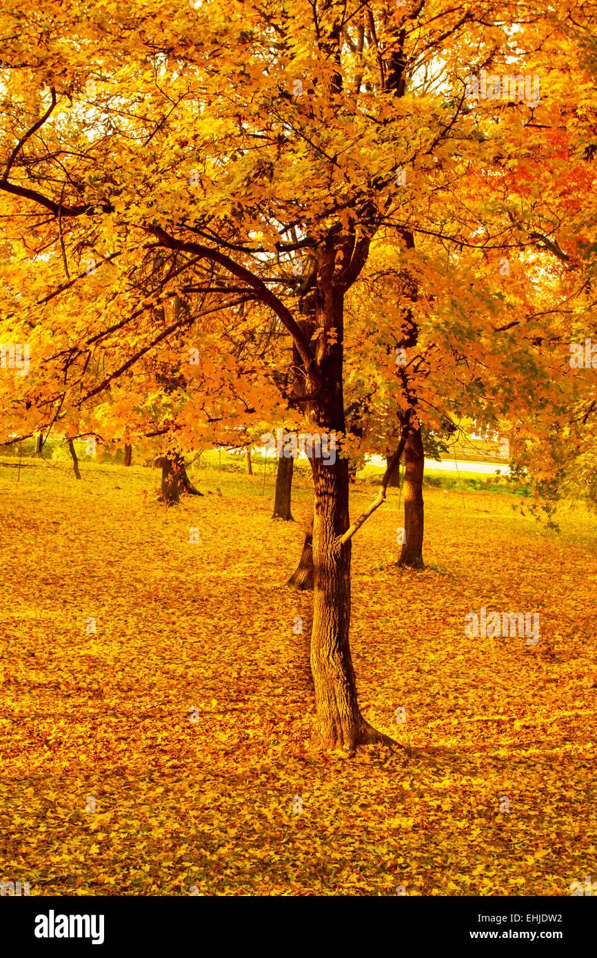 Paisajes de otoño Imagen De Stock