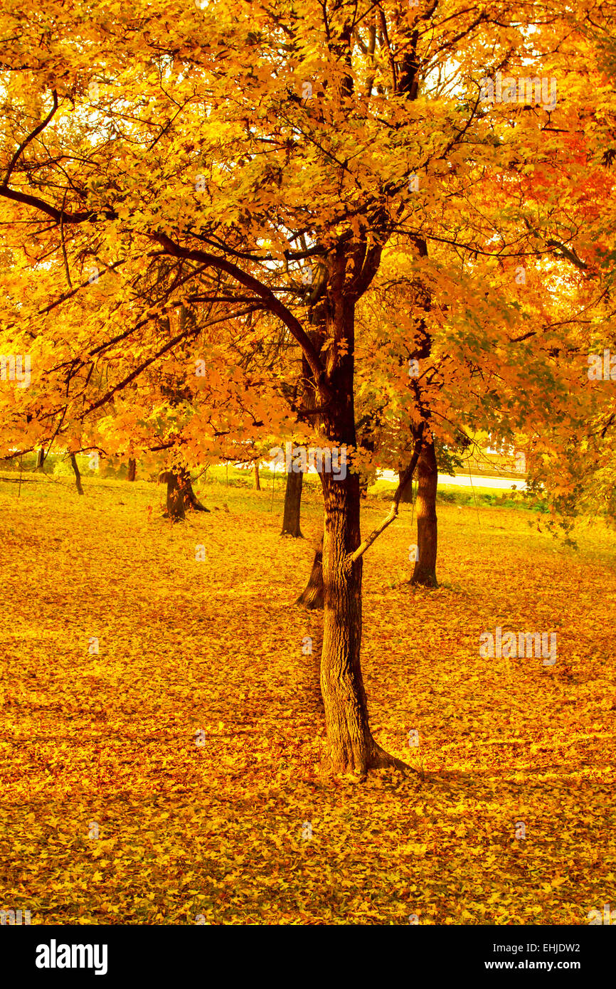 Paisajes de otoño Foto de stock