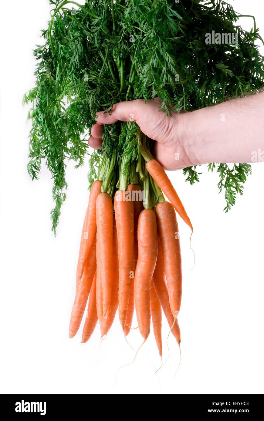 Los agricultores mano sujetando un montón de zanahorias lavadas fresco sobre fondo blanco. Imagen De Stock