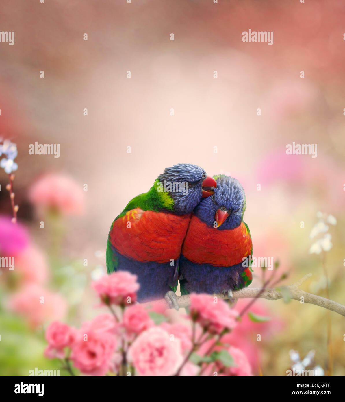 Rainbow Lorikeets encaramado en el jardín Imagen De Stock