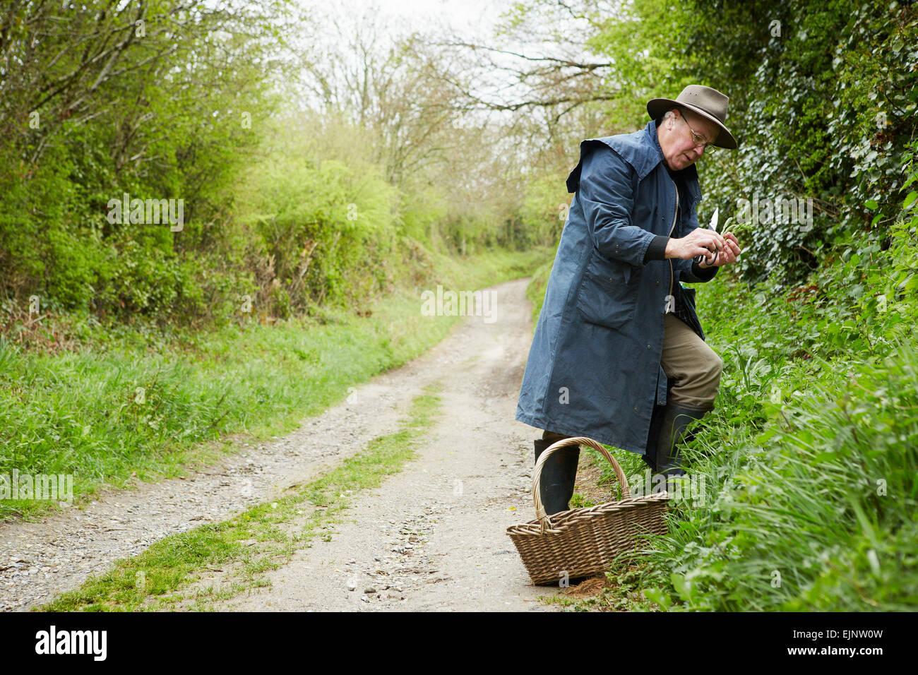 Un hombre en un largo abrigo y botas forrajeando para plantas comestibles y sabrosos en el seto. Imagen De Stock