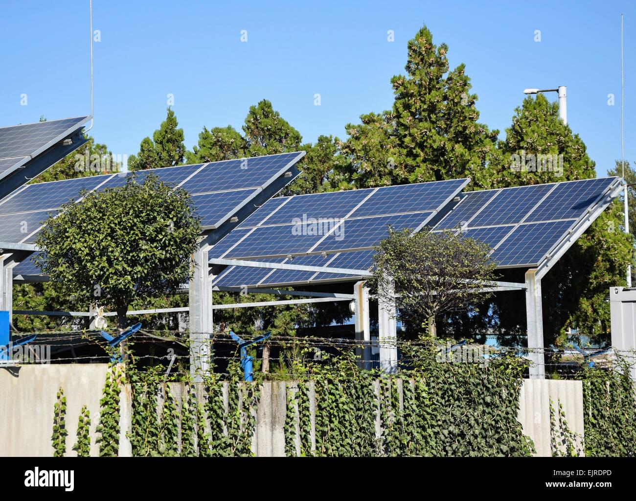 Paneles Solares Junto A Algunos 225 Rboles Foto Amp Imagen De
