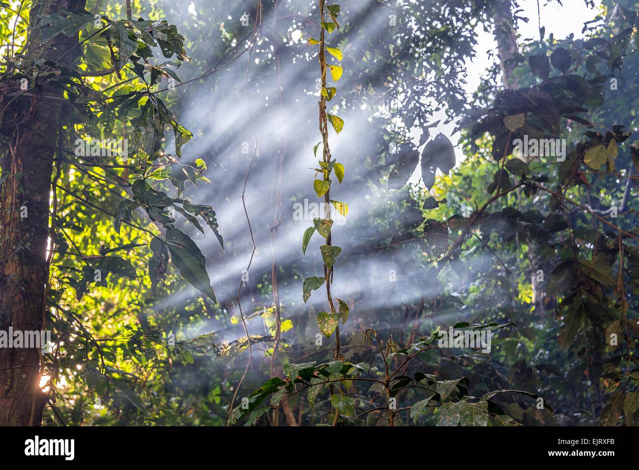 Los haces de como pasar a través de humo en el bosque lluvioso del Amazonas cerca de Iquitos, Perú Imagen De Stock