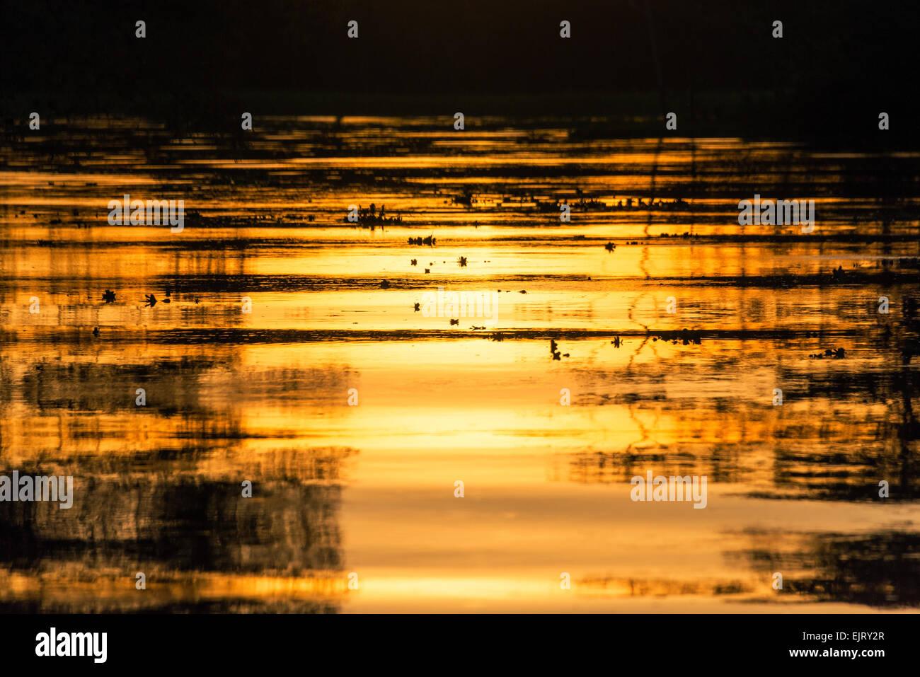 Vista de un color anaranjado fuego atardecer reflejándose en un río en el bosque lluvioso del Amazonas cerca de Iquitos, Perú Foto de stock