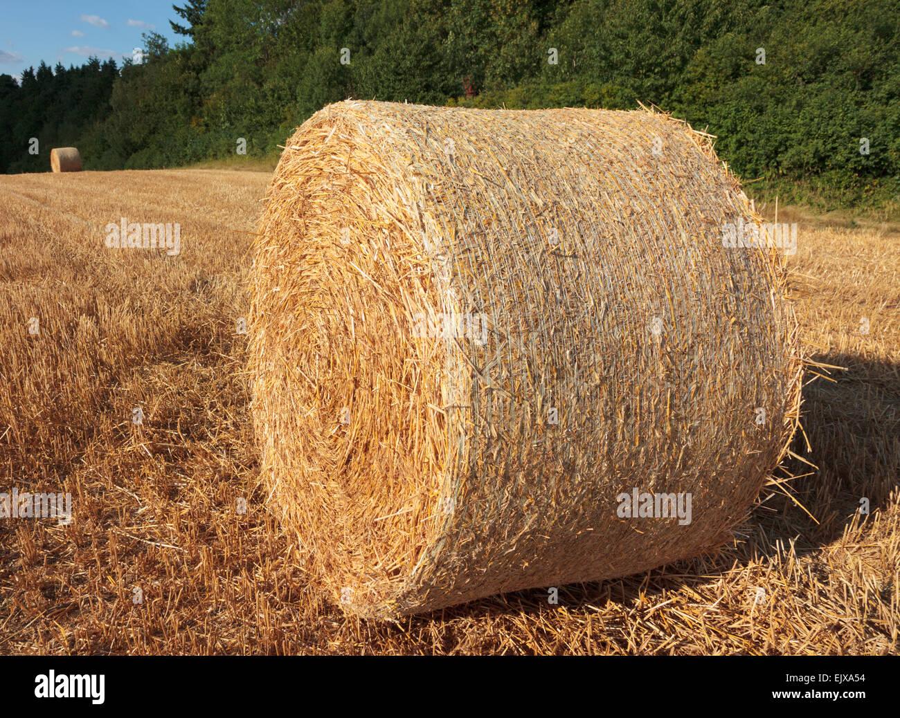 Rollo de heno cosechado en un campo soleado de verano Foto de stock