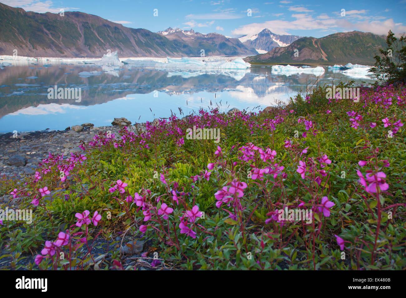 Oso laguna glaciar, fiordos de Kenai National Park, cerca de Seward, Alaska. Imagen De Stock