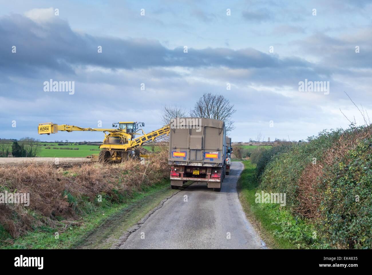 Operación de carga de remolacha azucarera bloqueando country road Imagen De Stock