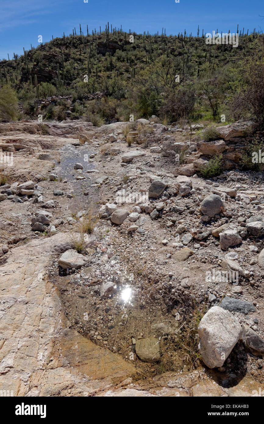 Agua en el desierto, Sabino Canyon, Arizona Imagen De Stock