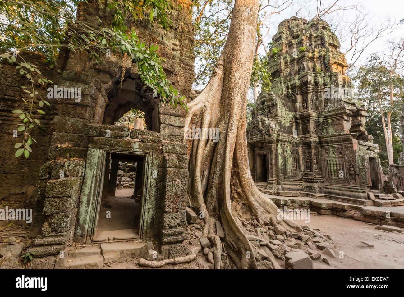 Templo de Ta Prohm, siendo destruida por el crecimiento de la selva, Angkor, sitio del Patrimonio Mundial de la Imagen De Stock