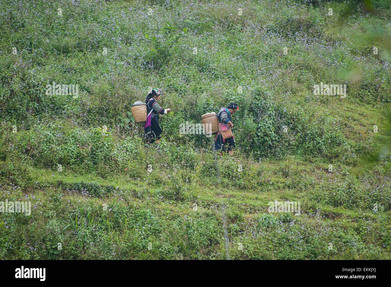 Las personas de las minorías étnicas, caminar a través de las montañas de Vietnam. Imagen De Stock