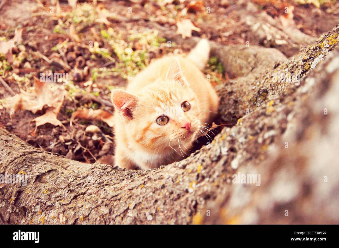 Gatito mirando un árbol Foto de stock
