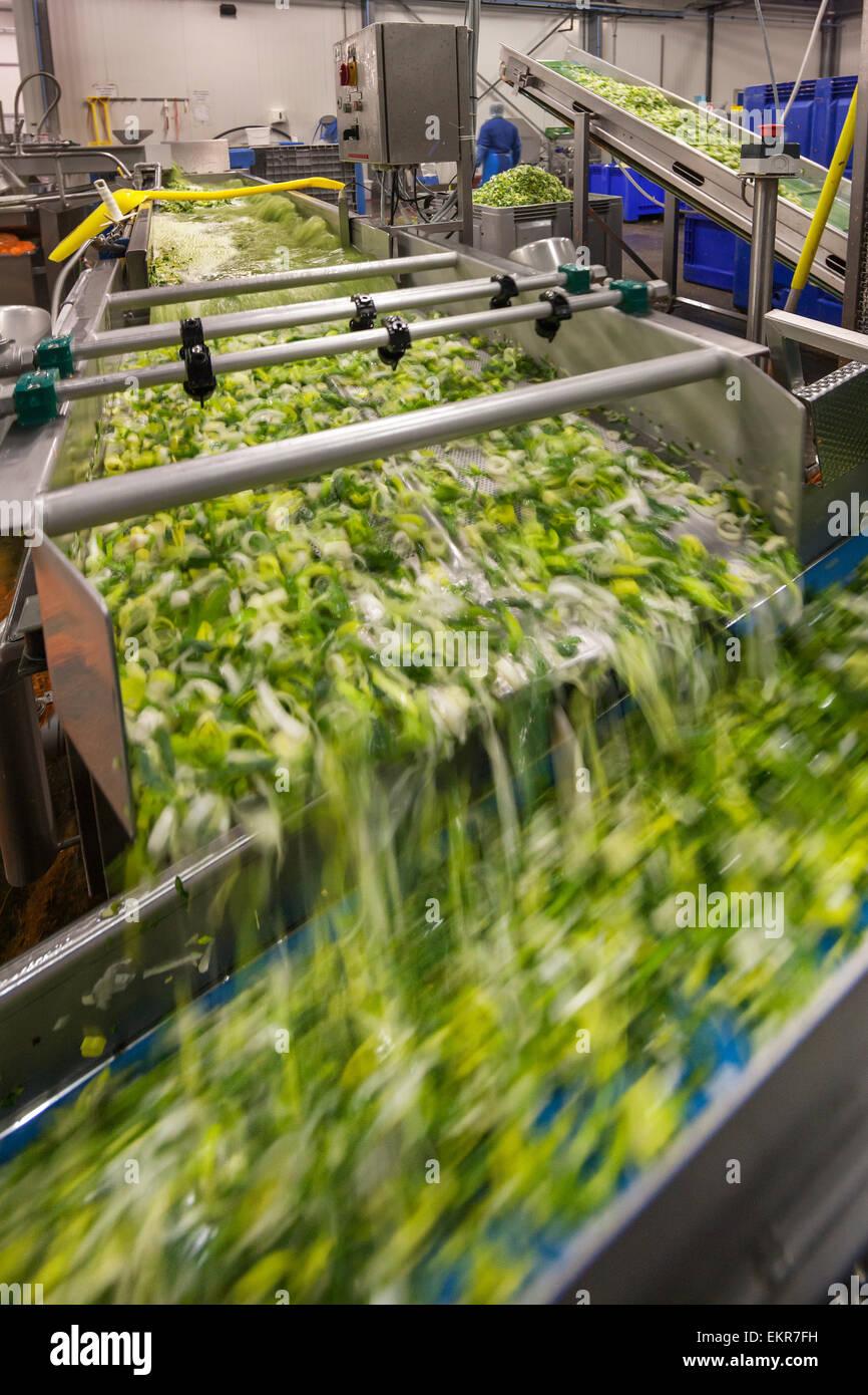 Lavadora de hortalizas en la fábrica de alimentos vegetales triturados de lavado Imagen De Stock